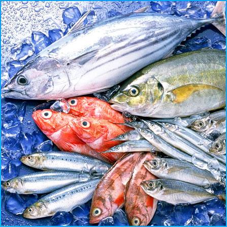 Преимущества свежемороженой рыбы