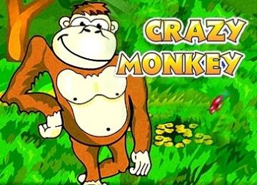 Основы управления игровым автоматом Crazy Monkey